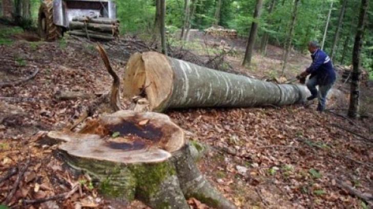 modificări la codul silvic