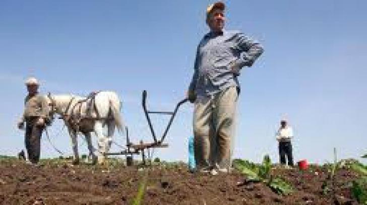 Culturile agricole, în pericol