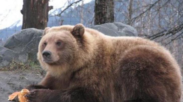 Ziua ursului. Ce sărbătoresc creştinii pe 2 februarie. TRADIŢII şi OBICEIURI