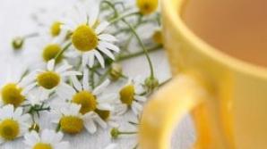 Cele mai folosite plante in tratamente naturiste si functiile lor miraculoase