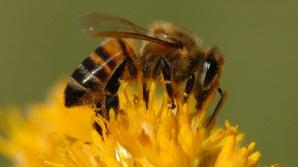 CURA DE MIERE: Produse apicole şi avantajele apiterapiei