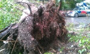 Copac căzut peste o maşină, din cauza vântului puternic