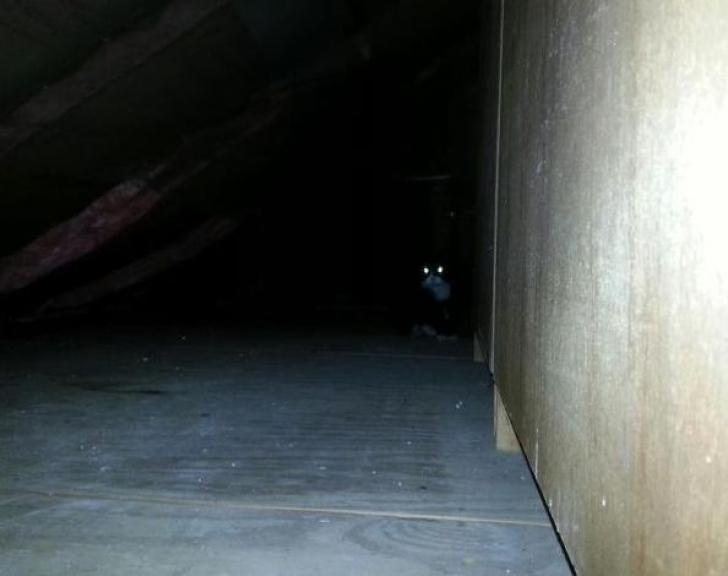 O pisică jucăuşă l-a speriat serios pe un bărbat care şi-a auzit felina miorlăind din perete