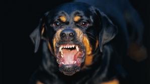 Fetiţă de doi ani din Timiş, muşcată de doi câini Rottweiler, pe stradă