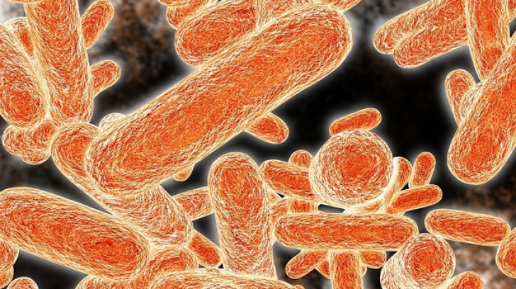 A fost inventat nasul capabil să detecteze bacteriile
