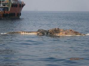<p>Creatură bizară în apele Golfului Persic</p>
