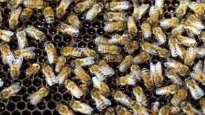 Femeia a trăit în casă cu 20.000 de albine