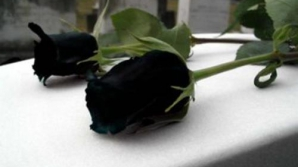 Exista viata dupa moarte? Iata ce spun psihiatrii