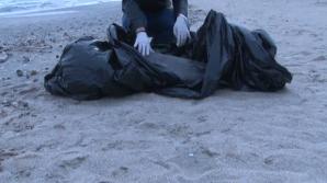 Delfin eşuat pe o plajă din Mamaia