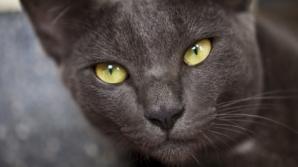 VAMPIRI ENERGETICI: Care sunt trăsăturile unui animal–vampir?