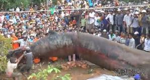 Monstrul care a speriat lumea este, cel mai probabil, o balenă eşuată