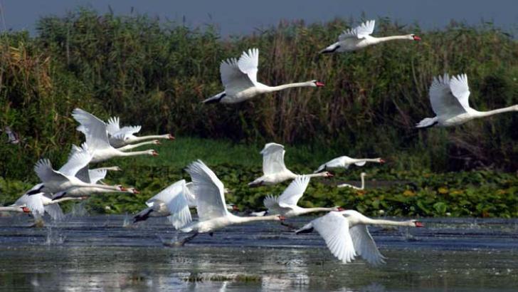 Singurul laboratul viu din Europa se află în Delta Dunării
