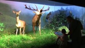 Noaptea Muzeelor: Aproape 18.000 de vizitatori, la Antipa