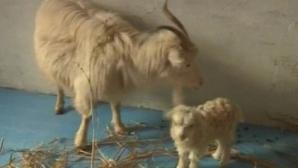 Comisia Europeană propune interzicerea clonării animalelor