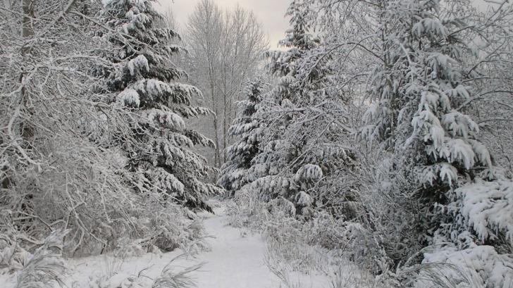 Ninsorile au pus stăpânire! Strat de zăpadă de 10 centimetri în Munţii Rodnei