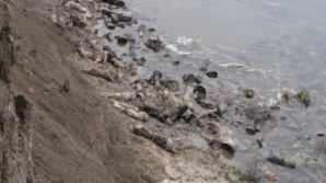 Descoperire înfiorătoare pe malul râului Siret