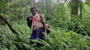 Omul care a împădurit de unul singur 550 de hectare