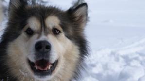 Povestea fascinantă a câinelui care a trăit 11.000 de ani