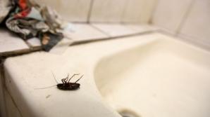 Control dispus de MS la SJU Vaslui, după apariţia unor imagini cu gândaci într-o secţie a spitalului