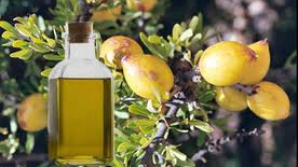 Secretele uleiului de argan