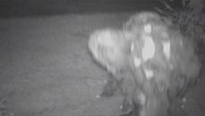 Rick Dyer susține că l-a ucis pe Bigfoot