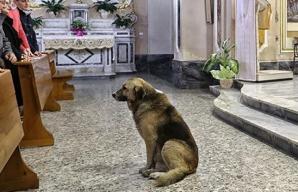 Tommy, câinele care vine zilnic la biserică, în speranţa că-şi va revedea stăpâna