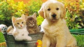 Cum arăta strămoşul câinilor şi al pisicilor?