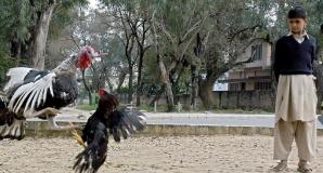 Arbitru pentru păsări, nou job în România