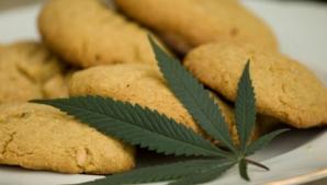 Preparate culinare cu marijuana - noua tendinţă la modă din gastronomia internaţională