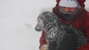 Câinii de la adăpostul Glina, în pericol de îngheţ