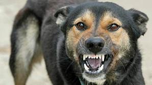 O tânără a fost atacată de o haită de câini