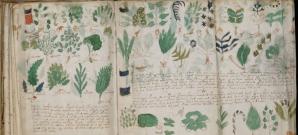 Manuscrisul Voinick