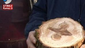 O cruce a aparut pe un copac in timp ce un satean incerca sa taie lemne