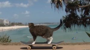 Didga, pisica pe skateboard