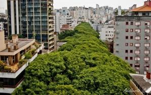 Strada din centrul oraşului brazilian Rua Goncalo de Carvalho