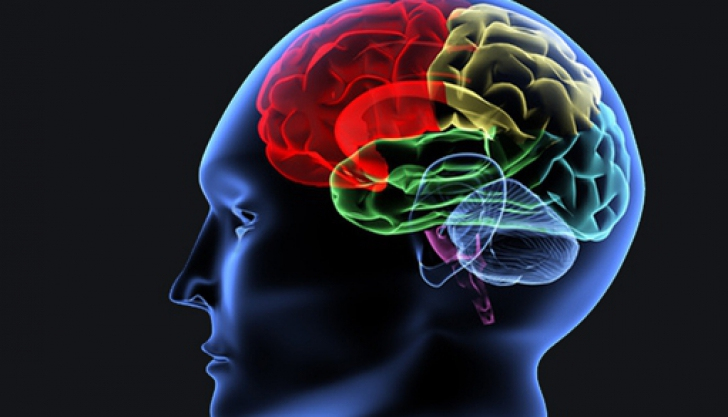 A fost descoperită o nouă regiune a creierului