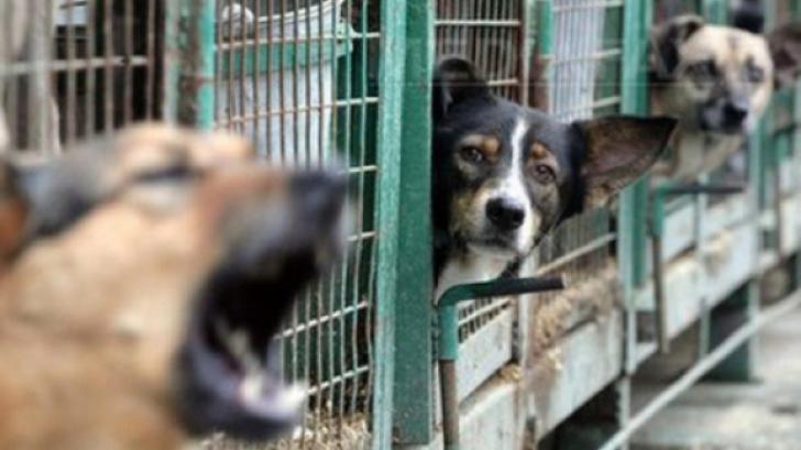 Sutele de maidanezi din Târgovişte ar putea fi adoptaţi de străini!