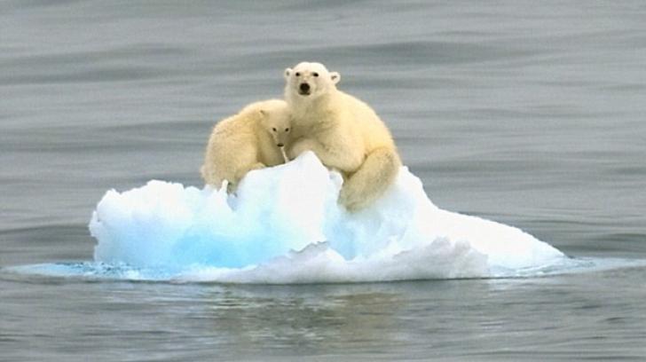 O noapte alături de un urs polar, distracţia care face furori în Franța