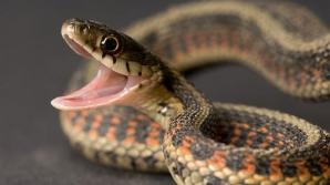 Efectul veninului de şarpe asupra sângelui