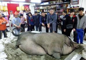 Nu ai mai văzut asemenea porc! Arată ca un monstru!