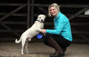 Soarta incredibilă a lui Ralph, un căţel maidanez atacat cu acid şi lăsat să moară în România, adoptat de o familie britanică