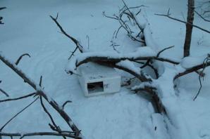 Pisicile din cutia găsită în pădure se simt acum bine