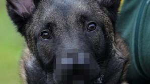 Snuffles, câinele cu două nasuri