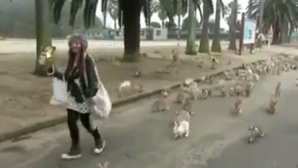 Imagini bizare: de ce este această femeie urmărită de sute de iepuri?