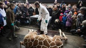 Girafa Marius de la zoo a fost împușcată în cap și dată la lei în fața unor copii