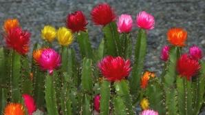Atenţie la plantele toxice!