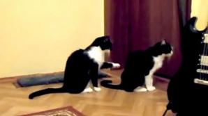 Cum îşi cere scuze o pisică de la o alta