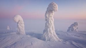Copaci acoperiţi de zăpadă în Finlanda