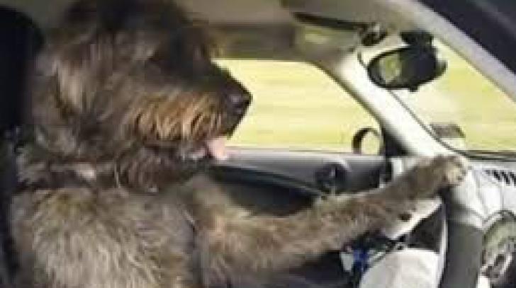 Femeie sau bărbat la volan? PRIVIREA câinelui din imagine spune totul