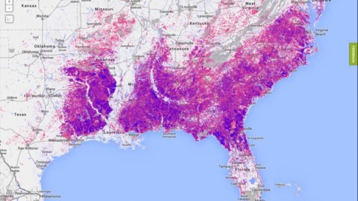Google a lansat un observator mondial al despăduririlor